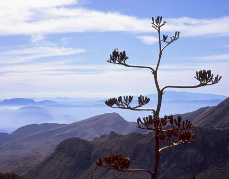 A century plant in Big Bend National Park, Texas. Stock Photo