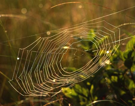 A spiderweb with dew on it. photo