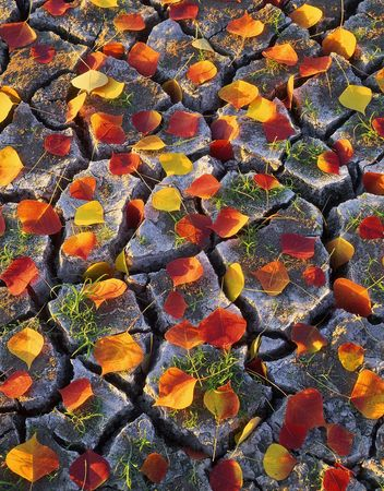 Leaves on cracked dirt photographed during the autumn season.