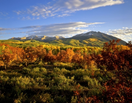 forested: West Beckwith Mountain in the Gunnison National Forest of Colorado.