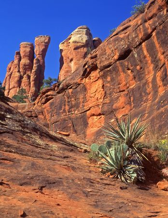 A desert formation and cactus, located in the Coconino National Forest, Arizona. Stock Photo - 813363