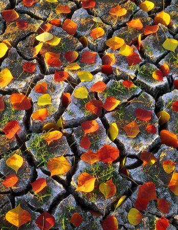 Red and yellow leaves on dry cracked ground.