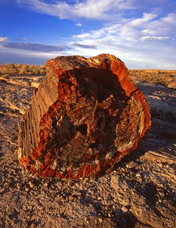 Part of a petrified tree in Petrified Forest National Park, Arizona. photo