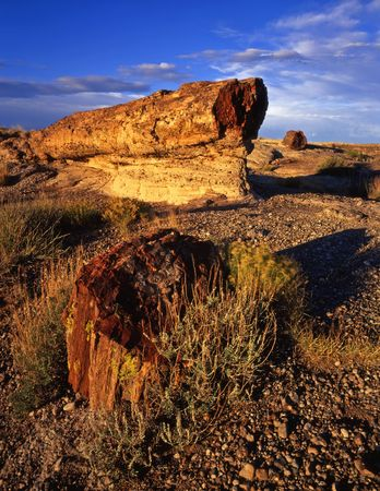 Petrified logs in Petrified Forest National Park, Arizona.