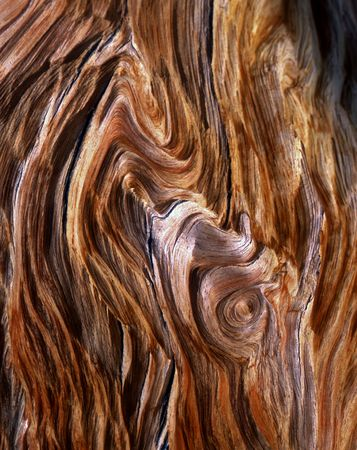 The exposed grain of a Bristlecone Pine Tree, located in the Patriarch Grove section of the Inyo National Forest, California. Stock Photo - 1200810