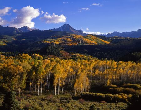 aspen leaf: Mt. Sneffels in the Uncompahgre National Forest, Colorado, photographed during the autumn season.