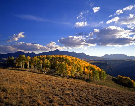 Mt. Wilson in the Uncompahgre National Forest, Colorado, during the autumn season.
