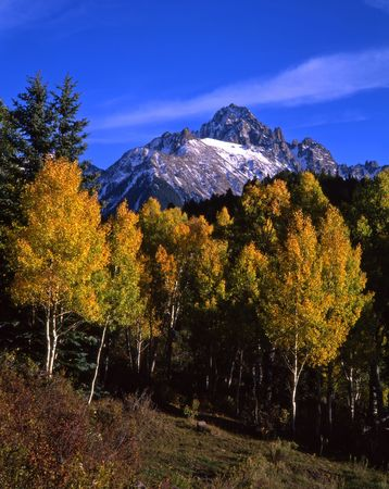 conifer: Mt. Sneffels in the Uncompahgre National Forest, Colorado, during the autumn season.
