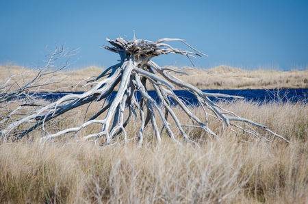 Giant Driftwood Stock Photo - 104732542