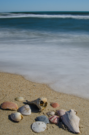 Seashells on the Outer Banks of North Carolina Stock Photo - 104732649