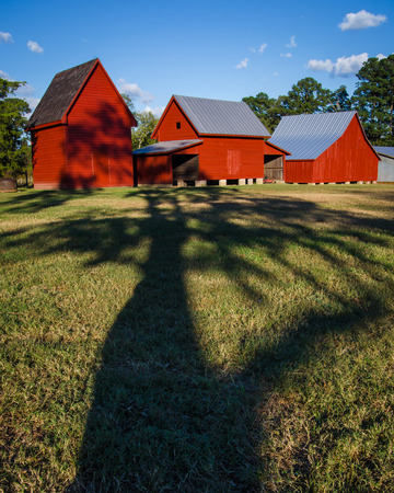 A tree shadow reaching for a trio of red barns at Windsor Castle Park in Smithfield, Virginia. Editorial