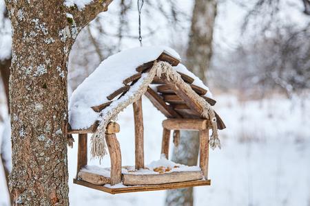 Homemade bird feeder. Helping birds in winter
