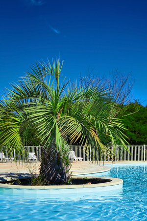 Beautiful swimming pool with clear blue water and green palm tree. Sunny summer day with blue sky