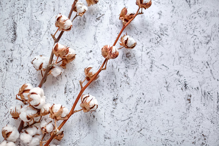 Two branches of white cotton flowers lying  on a wooden background with copy space Фото со стока