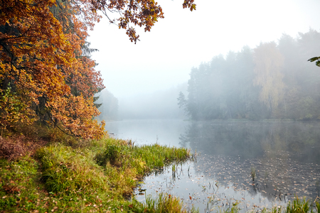 The shore of the forest lake, autumn landscape, oak branches with yellowed foliage, nature in october foggy morning Фото со стока