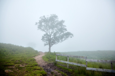 Hiking trail, wooden fence and tree in the fog. Foggy summer day. La Rhune mountain, Basque country, France