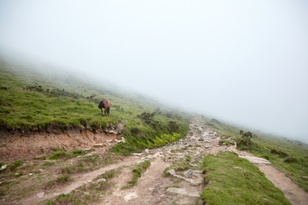 Hiking trail and brown horse on the green slope. Foggy summer day. La Rhune mountain, Basque country, France Stock Photo - 123902862