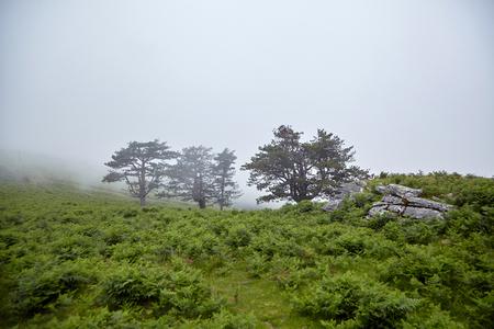 Trees in the fog on the hillside Stock Photo - 123902872