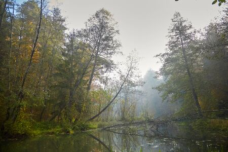 Autumn landscape. Morning foggy forest with yellow foliage, calm swamp river. Nature in Belarus Imagens