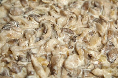 Oyster mushrooms cooked in sour cream sauce. Food texture background