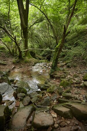 Stone path through a stream in a green deciduous forest. Hiking trail, creek, summer nature