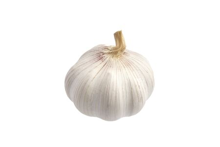 Single garlic, whole vegetable crop, isolated on white background. Healthy food fragrant ingredient