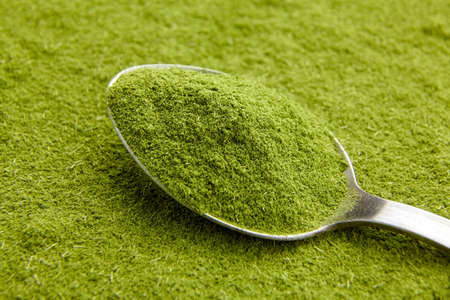 Organic wheatgrass or barley grass powder superfood in steel spoon. Detox dietary supplement.