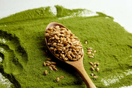 Organic wheatgrass seeds for sprouting in wooden spoon on wheatgrass powder background.