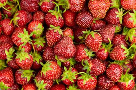 Strawberry background. Heap of red ripe strawberries, fresh juicy summer berries, top view