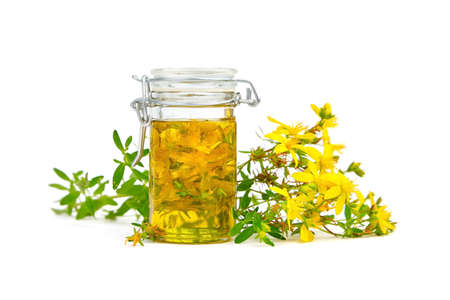 St. John's wort extract in glass bottle and branch of fresh yellow flowers isolated on white background. Flowering plant, healing herb. Alternative medicine, herbal remedy