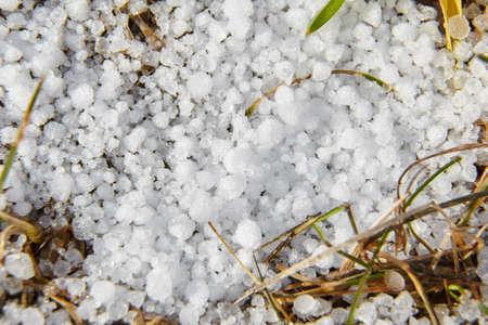 Snow pellets, graupel on the ground. Form of precipitation falls in winter storms. Graupel has shape of small white balls. Soft hail on grass, closeup 版權商用圖片