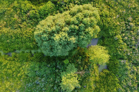 Aerial view - summer meadow with grass, flowers, trees and stream. European nature.
