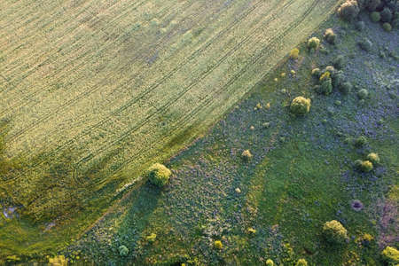 Aerial landscape - cultivated field and green meadow with purple flowers. European nature.