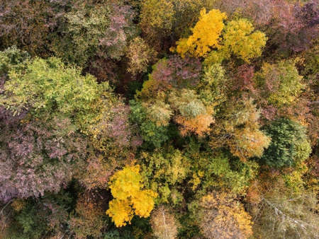 Aerial view of autumn forest, trees with yellow foliage, top view. Fall, autumn nature, aerial landscape Archivio Fotografico
