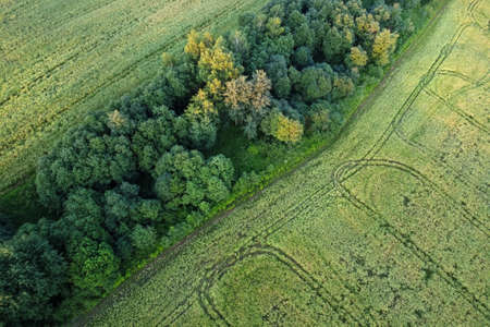 Aerial view - summer field with forest border. European nature.