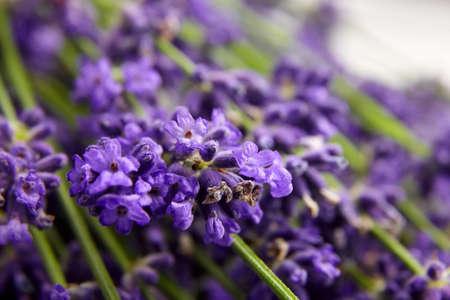 Organic lavender flowers buds closeup, floral background Archivio Fotografico