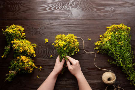 Preparation of medicinal herbs - Hypericum perforatum or St Johns wort bunches ready for drying. Alternative medicine. Archivio Fotografico