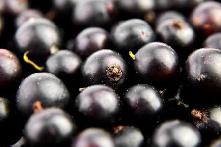 Black currant fresh berries closeup, healthy vegan food background