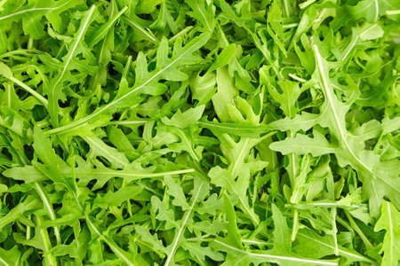 Green fresh arugula or rucola leaves texture background. Healthy diet food concept Archivio Fotografico