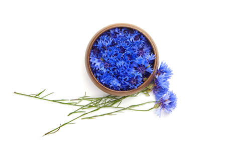 Medicinal herb - blue fresh cornflower flowers buds in wooden bowl isolated on white background, top view. Alternative herbal medicine.