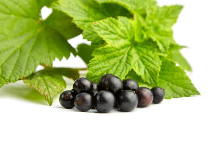 Ripe black currant berries with green fresh leaves isolated on white background, summer season vitamins food Archivio Fotografico