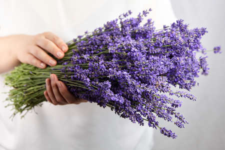Beautiful natural lavender flowers bouquet in female hands. Aromatherapy.