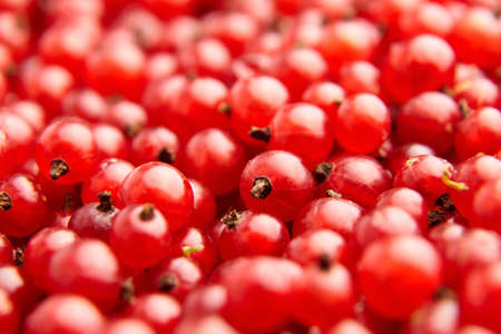 Red currant fresh berries closeup, healthy food background Archivio Fotografico