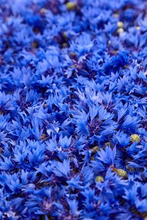 Cornflower fresh buds - herbal tea ingredient, medicinal herb for herbal tea blends Stock fotó