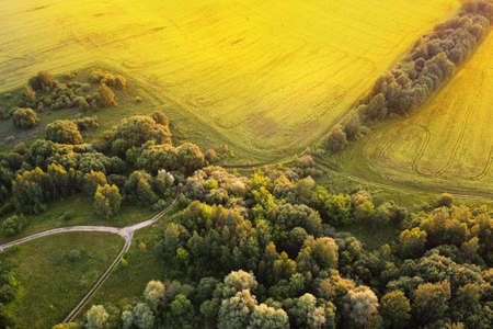 Aerial view of rural road between green field and forest at sunset time. European nature. Stok Fotoğraf
