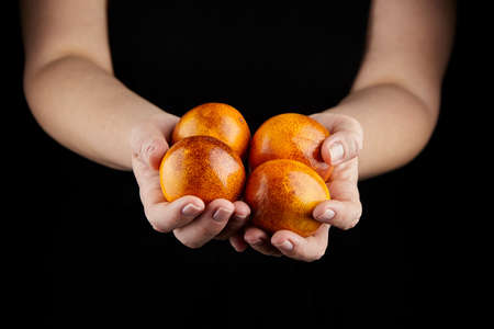 Blood oranges (red oranges) in hands on black background. Person holging handful of whole citrus fruits with red yellow peel, selective focus