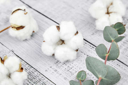 Cotton plant white flowers and green eucalyptus leaves on gray wooden background. Natural soft cotton and fresh eucalyptus branch Stock fotó