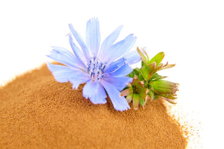 Chicory root powder with blue flower isolated on white background. Chicory coffee, organic food additive, closeup
