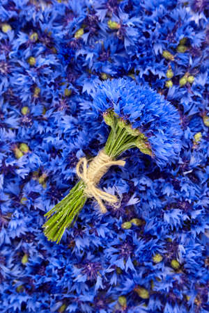 Blue summer cornflowers rustic bouquet on fresh flowers petals background