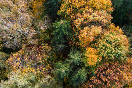 Aerial view of autumn forest, trees with yellow foliage, top view. Fall, autumn nature, aerial landscape Stock fotó